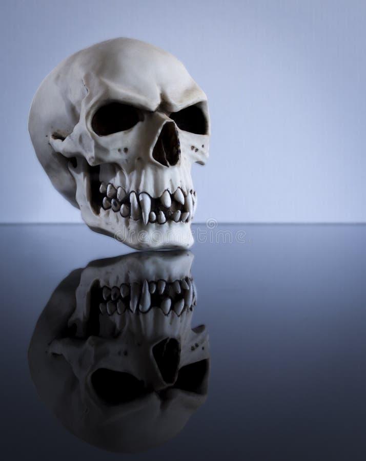 Cráneo flotante fotos de archivo