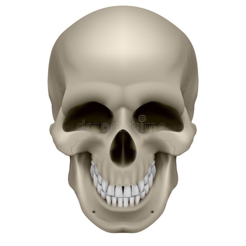 Cráneo humano libre illustration