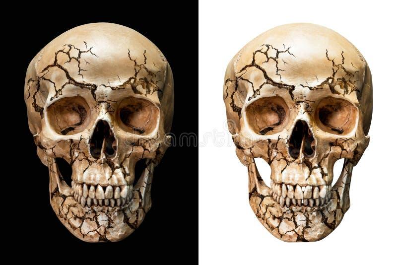 Cráneo humano agrietado imagenes de archivo