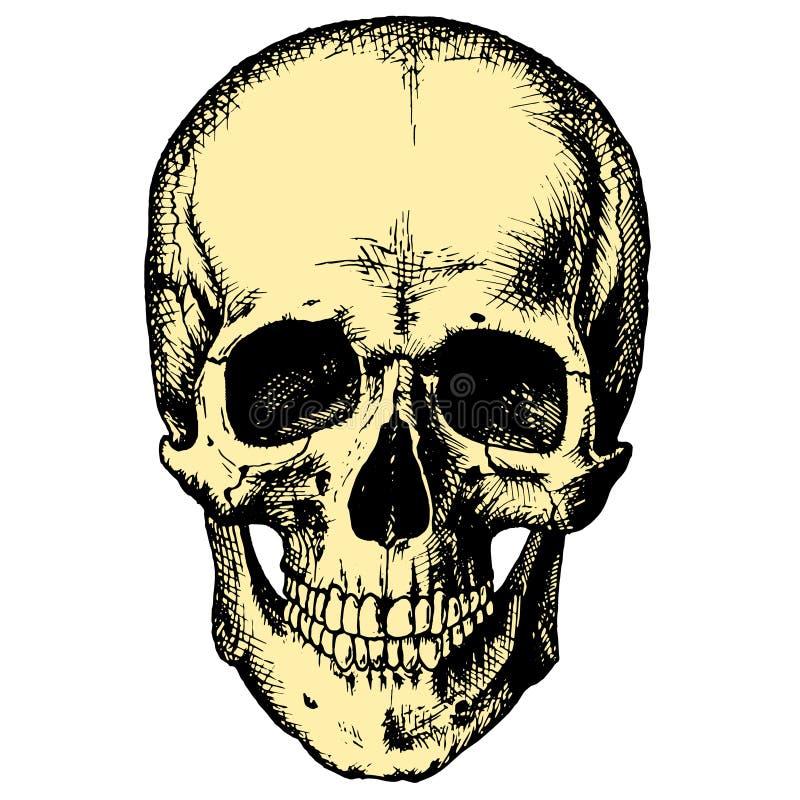 Cráneo humano amarillo fotos de archivo
