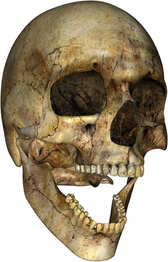 Cráneo humano asustadizo de Halloween aislado stock de ilustración