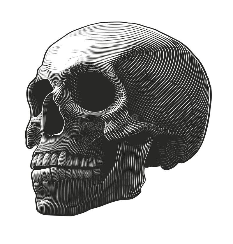 Cráneo humano en estilo del grabar en madera libre illustration