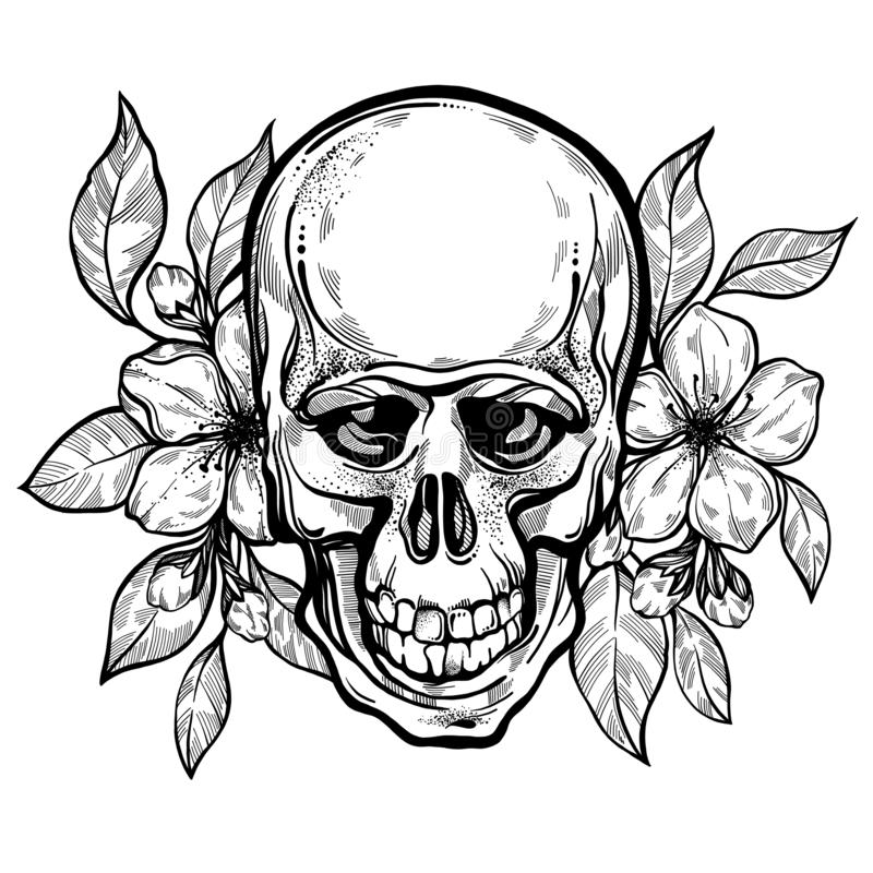 Cráneo humano exhausto de la mano realista con las flores de la manzana Ejemplo del vector en estilo del boho Símbolo místico eso libre illustration