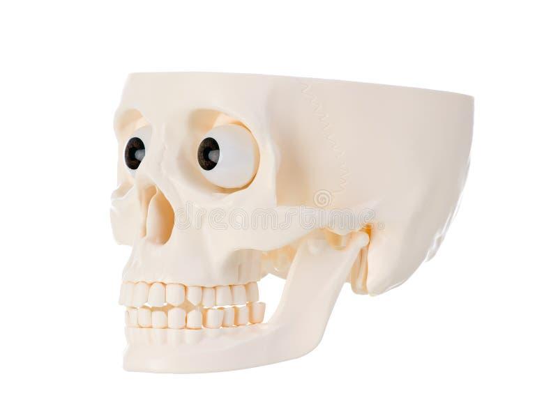 Cráneo humano plástico imagen de archivo