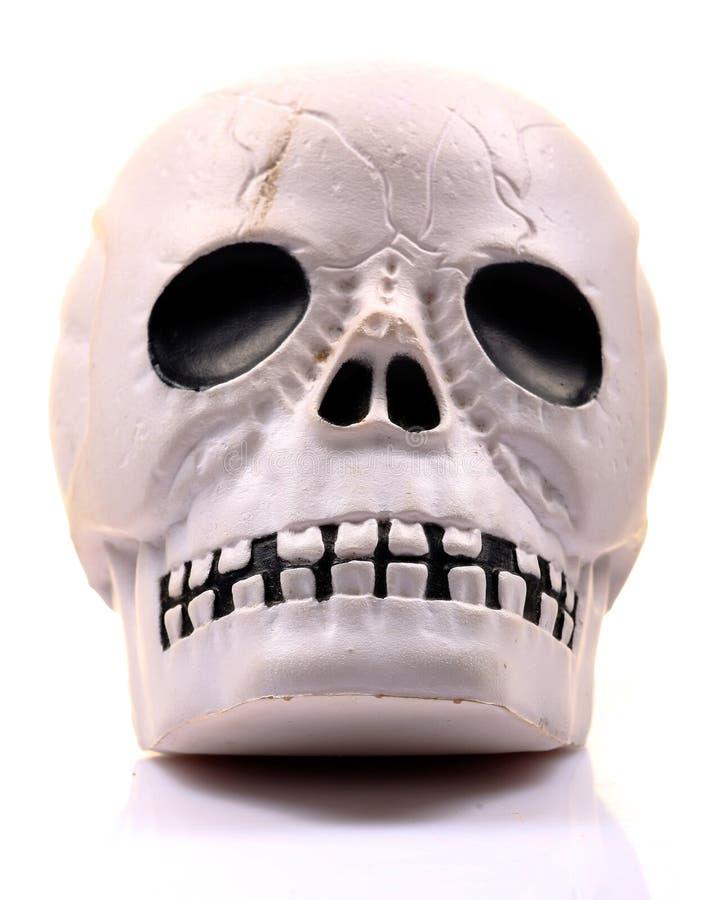 Cráneo humano plástico imágenes de archivo libres de regalías