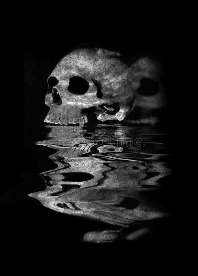 Cráneo humano y reflexión imagen de archivo libre de regalías