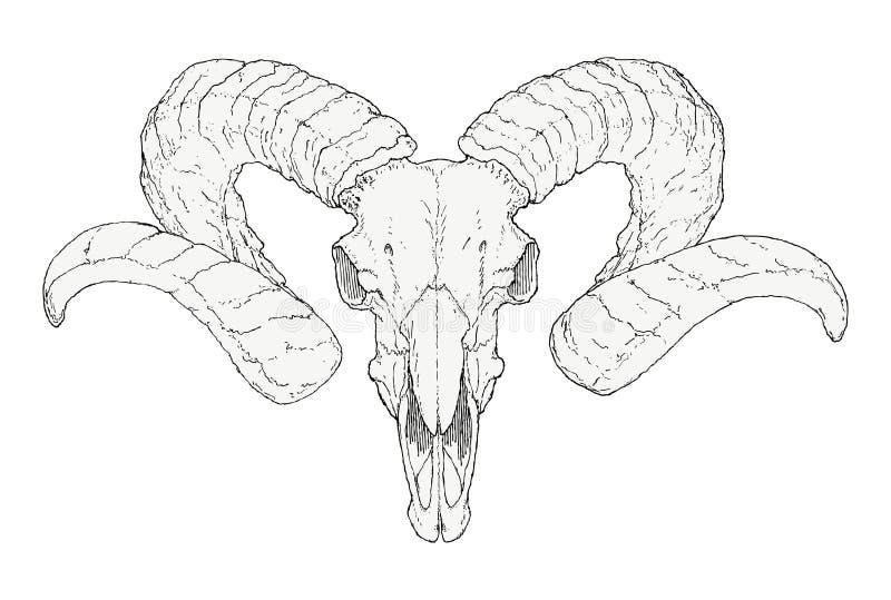 Cráneo a mano de la cabra ilustración del vector