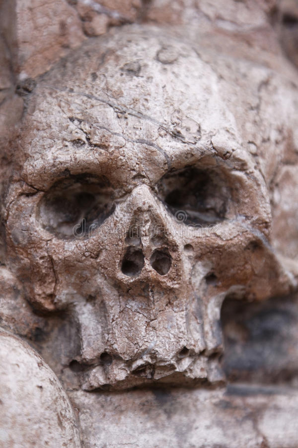 Cráneo muerto fotografía de archivo libre de regalías