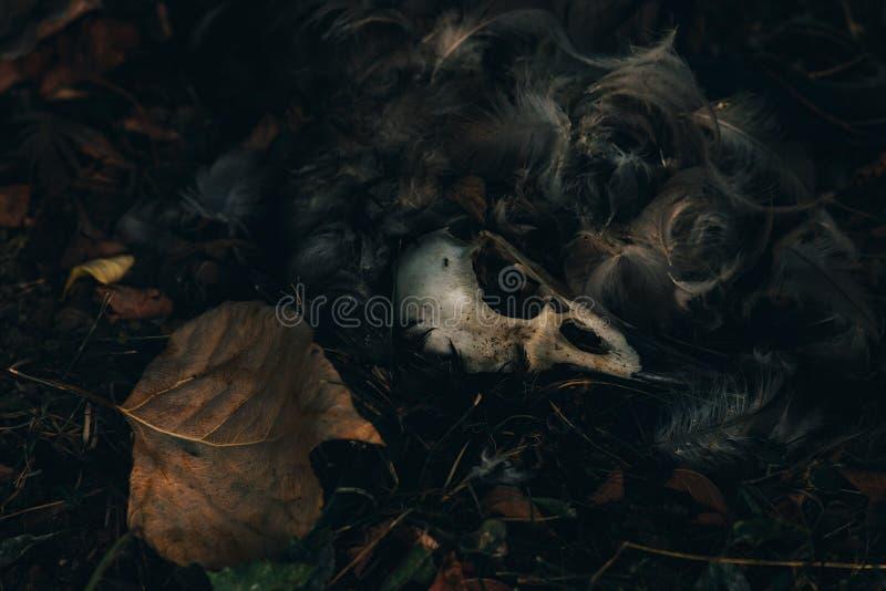 Cráneo muerto del pájaro que miente en la hierba con las hojas caidas fotos de archivo libres de regalías