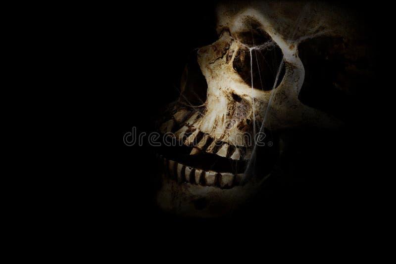 Cráneo oscuro imagenes de archivo