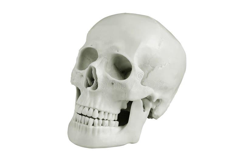 Cráneo principal imagen de archivo