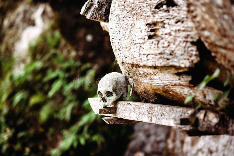 Cráneo viejo que pone cerca del ataúd de madera Ataúdes de la ejecución, sepulcros Sitio de entierros tradicional, cementerio Ket fotografía de archivo libre de regalías