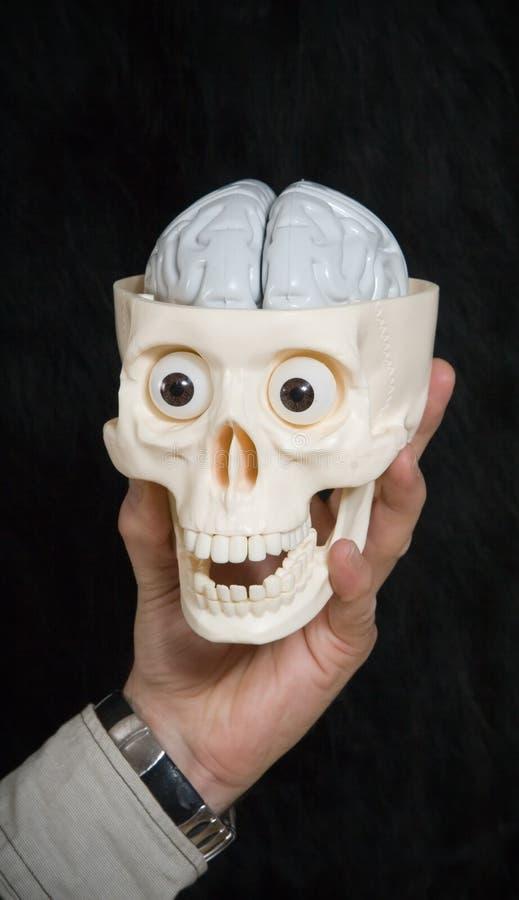 Cráneo y cerebro de la explotación agrícola de la mano fotografía de archivo libre de regalías