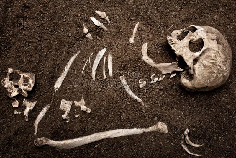 Cráneo y hueso fotografía de archivo libre de regalías