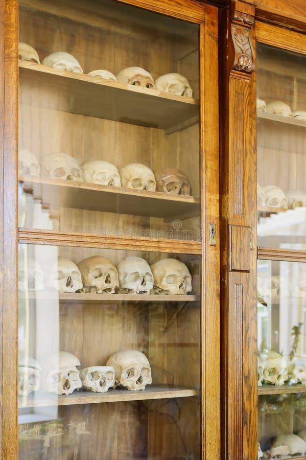 Cráneos humanos en el armario detrás del vidrio Una ayuda visual para los estudiantes de la universidad médica fotos de archivo
