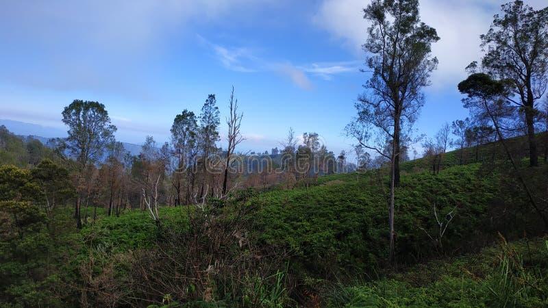Cráter de Ijen del soporte, región de Bondowoso, Indonesia imagenes de archivo