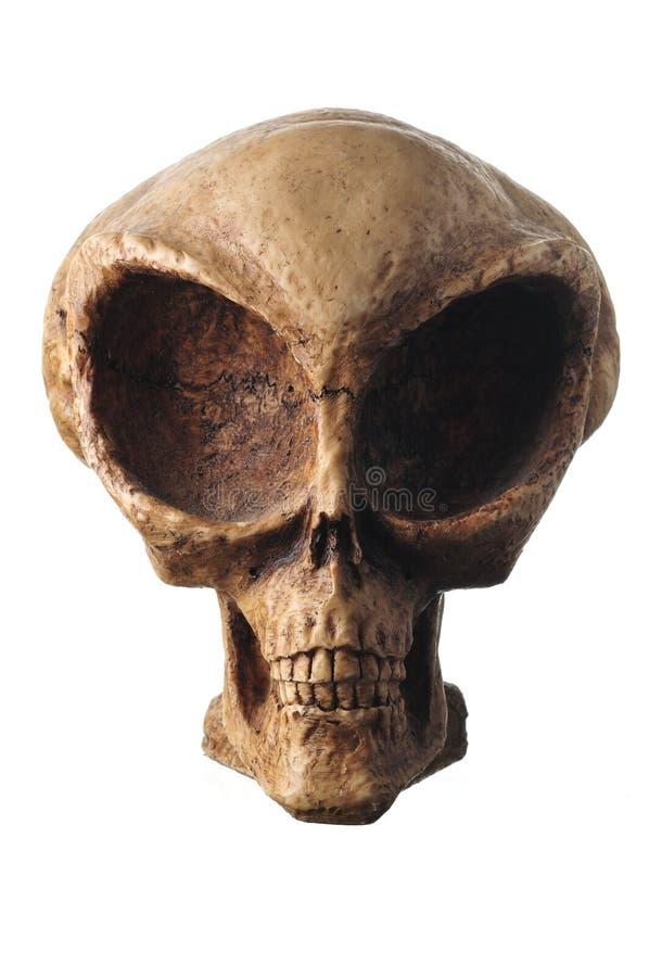 Crâne étranger image stock