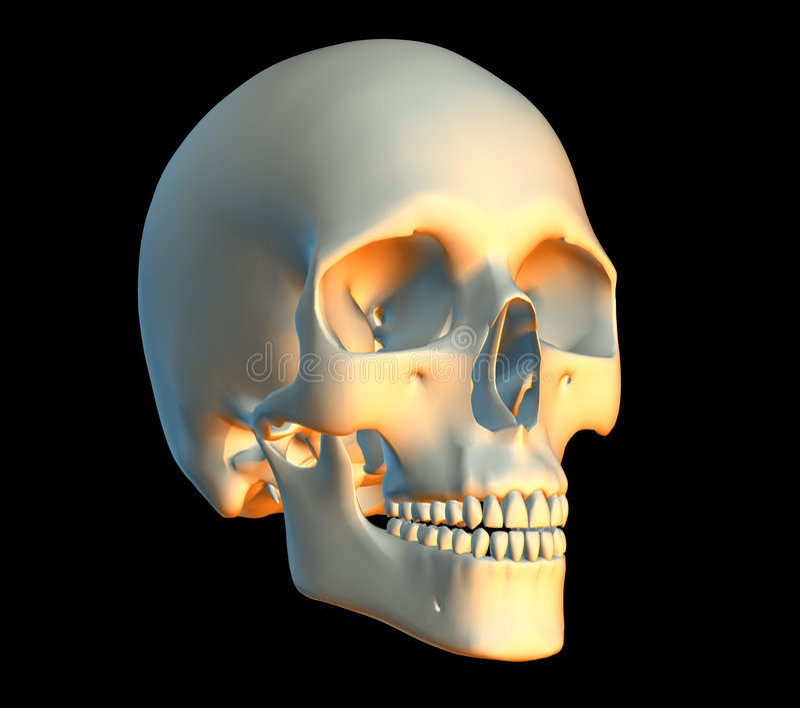 Crâne illustration de vecteur