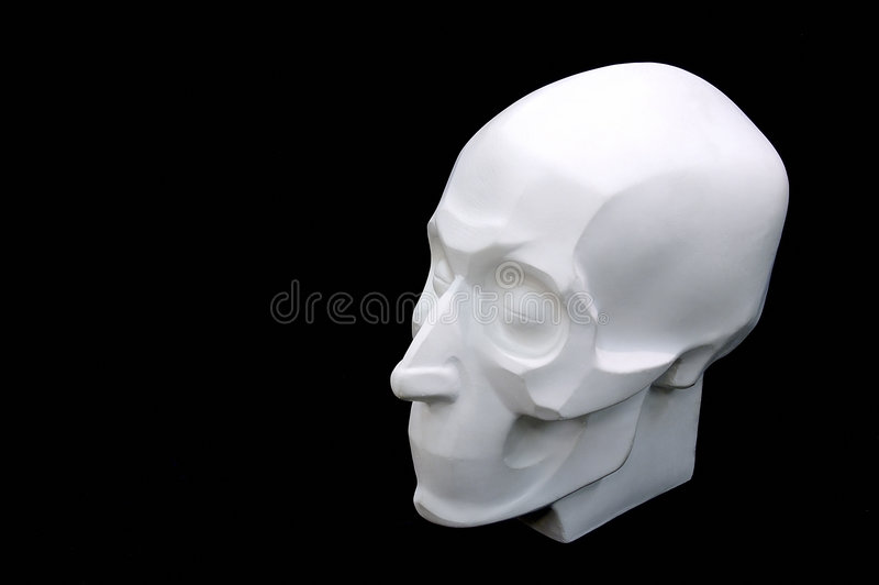 Download Crâne image stock. Image du sculpture, menton, plâtre, support - 60129