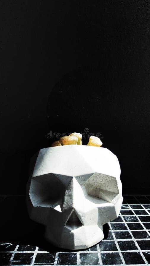 Crâne blanc, pots d'usine sur le plancher de mosaïque noir La lumière du soleil brille au crâne blanc a formé des pots photos stock