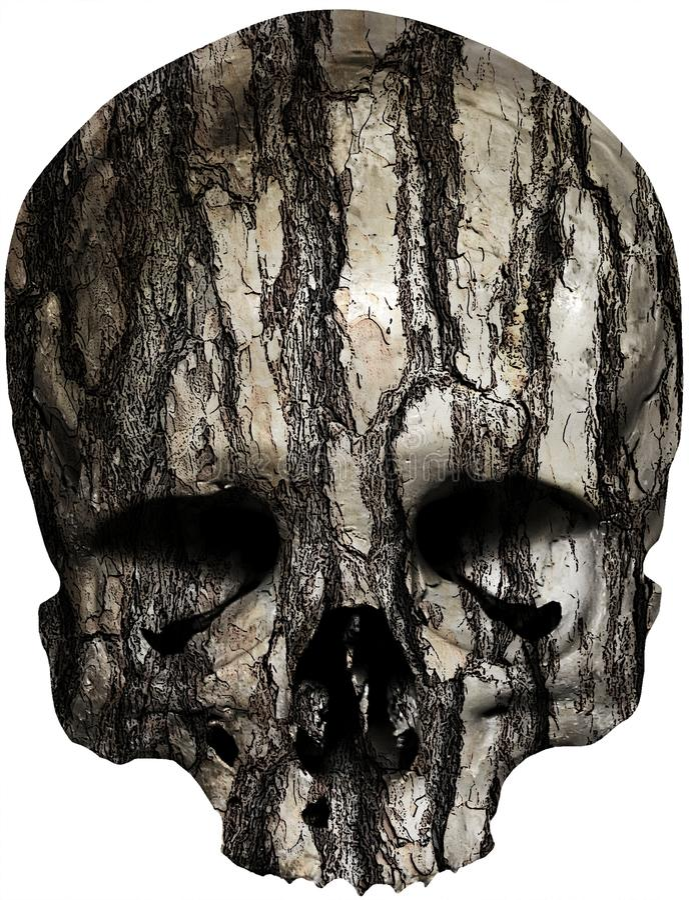 Crâne couvert de vieille écorce d'arbre illustration stock