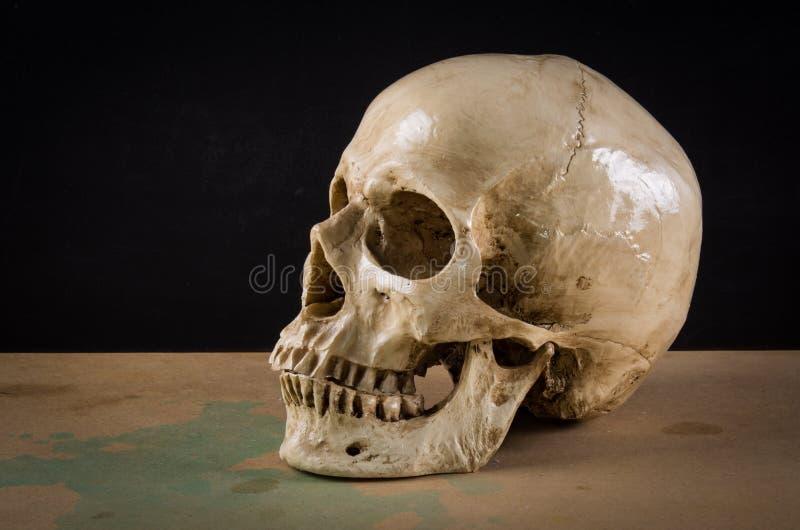 Crâne d'humain de la mort images libres de droits