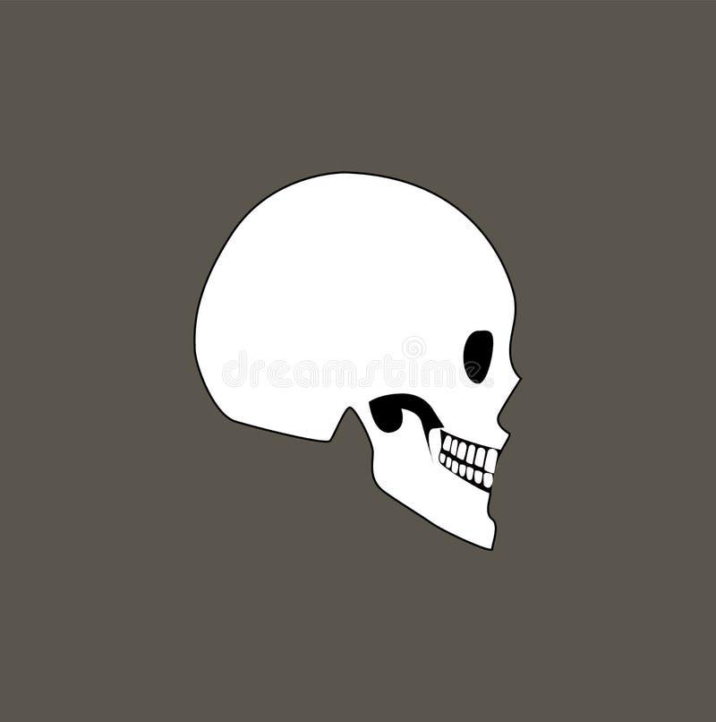 Crâne d'illustration humaine de vecteur de vue de profil illustration libre de droits