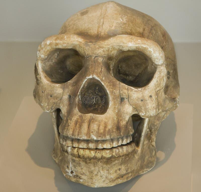 Crâne d'indigène indigène au Pérou photographie stock