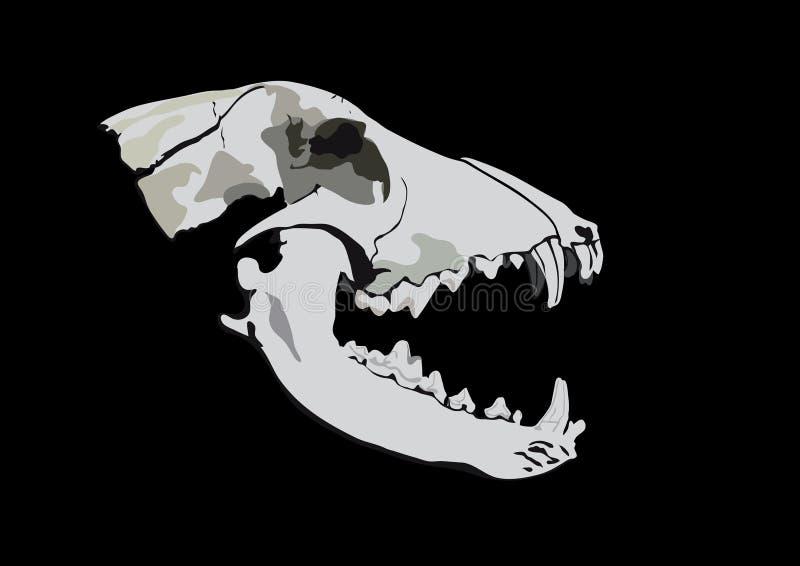 Crâne D Un Prédateur Photo stock