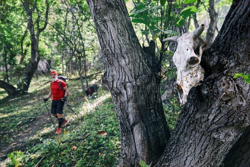 Crâne dans la forêt photos stock