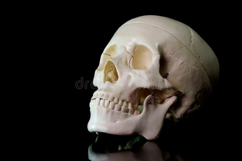 Crâne sur le fond noir photos stock