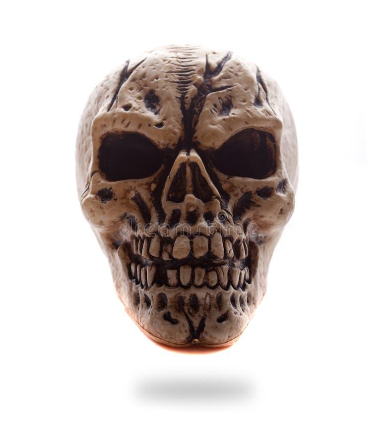 Crâne de face d'être humain de vue images libres de droits