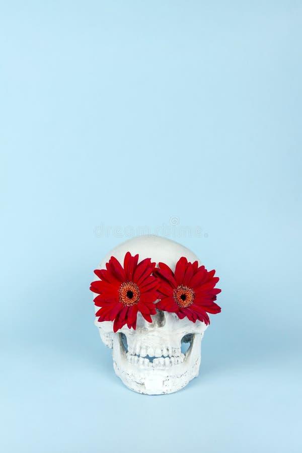Crâne de Halloween avec la fleur rouge sur le fond bleu en pastel image stock