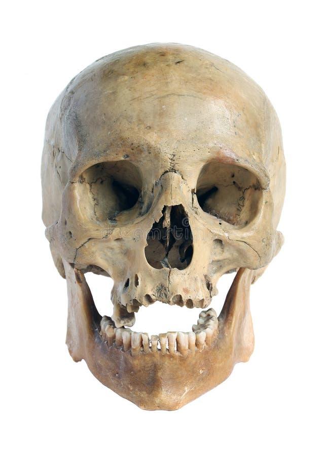 Crâne de la personne. images libres de droits