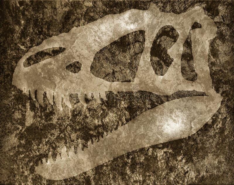 Crâne de tyrannosaure sur la roche photos libres de droits