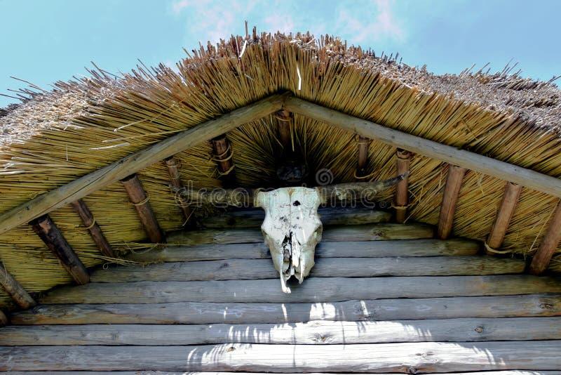 Crâne de vache à Taureau photo stock