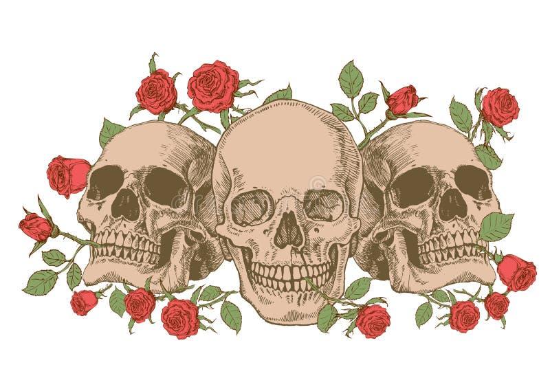 Crâne et roses illustration libre de droits