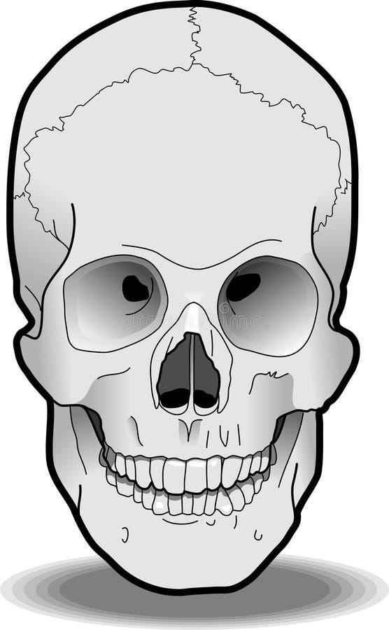 Crâne humain photos stock