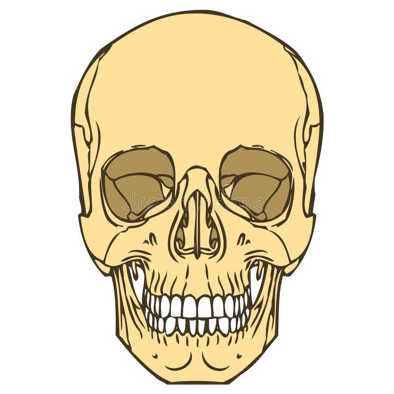 Crâne humain 01 illustration stock