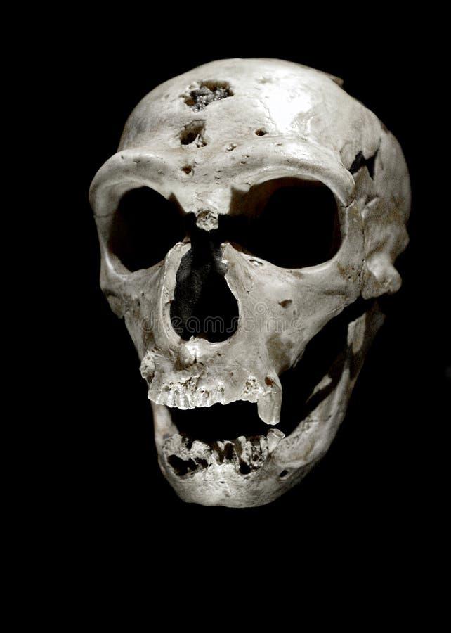 Download Crâne humain photo stock. Image du exposé, paris, tête - 87703118