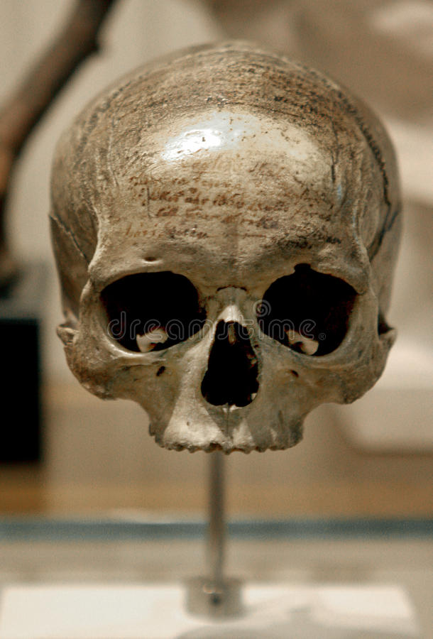 Download Crâne humain image stock. Image du archéologie, exposé - 87703123