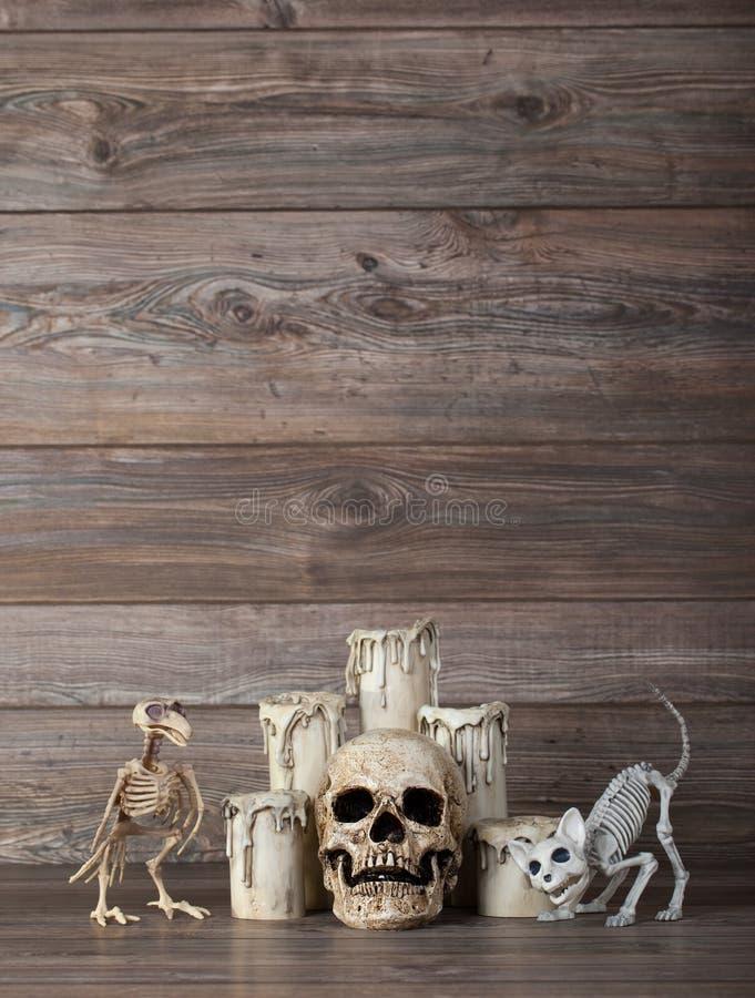 Crâne humain avec les bougies de fonte et les squelettes animaux photo stock