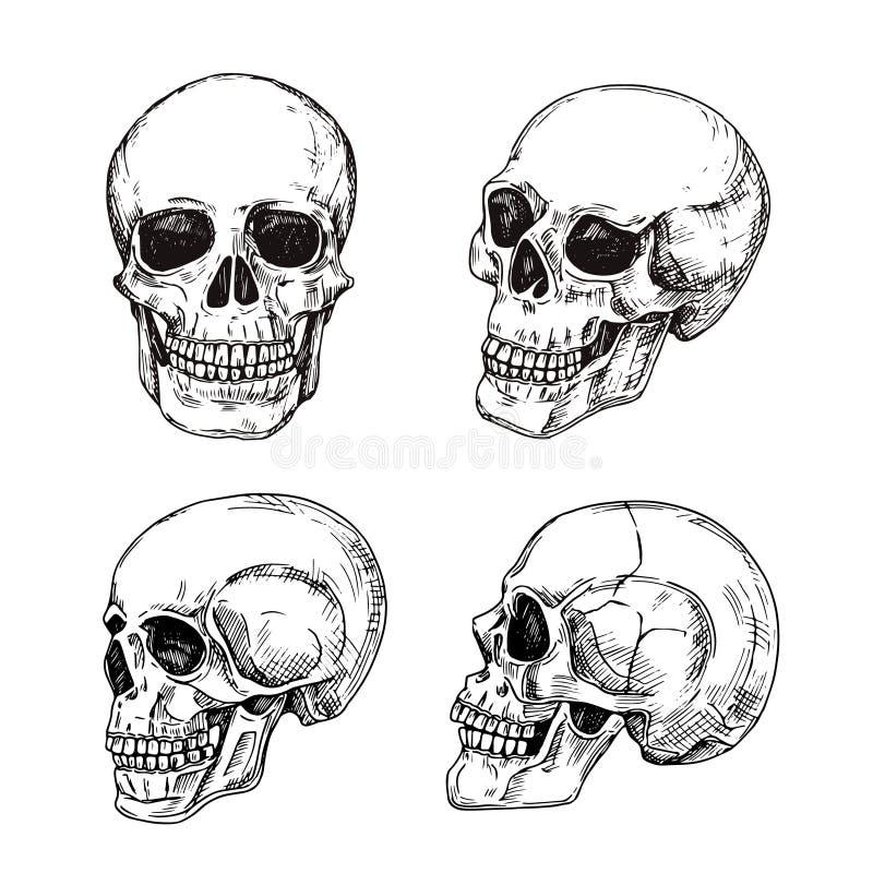 Crâne humain Crânes tirés par la main Conception de vecteur de tatouage de la mort de vintage de croquis d'isolement illustration de vecteur