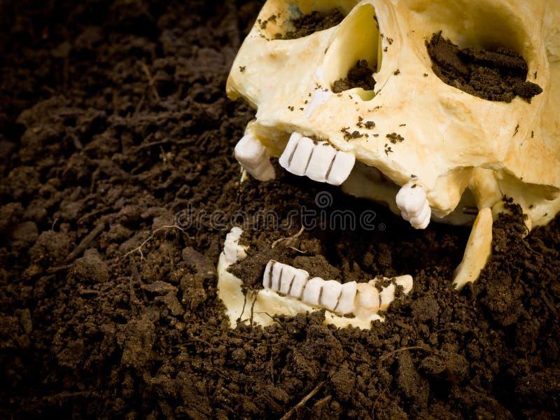 Crâne humain découvert photos libres de droits