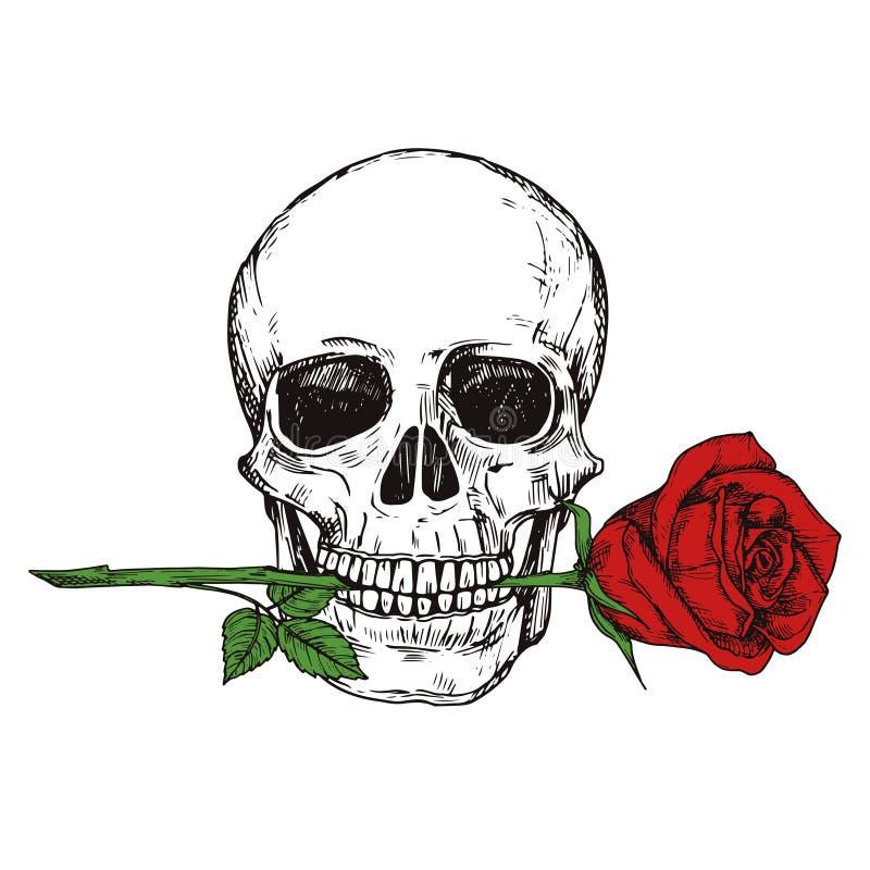 Crâne humain heureux tiré par la main avec la rose rouge - a esquissé l'illustration imprimable de vecteur de crâne illustration libre de droits