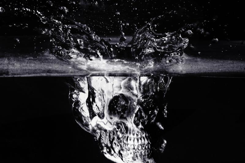 Crâne humain noir et blanc image libre de droits