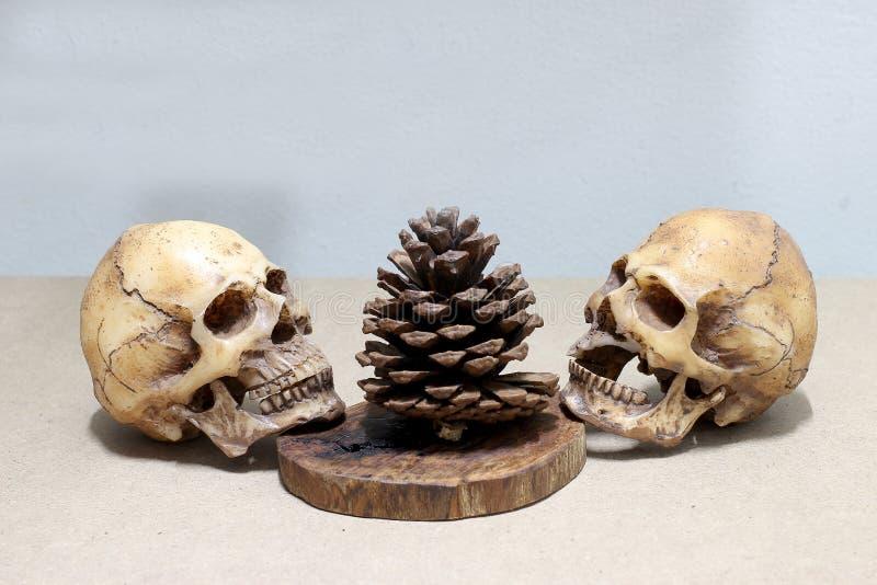 Crâne humain sur le vieux fond en bois ; l'encore-vie photographie stock libre de droits