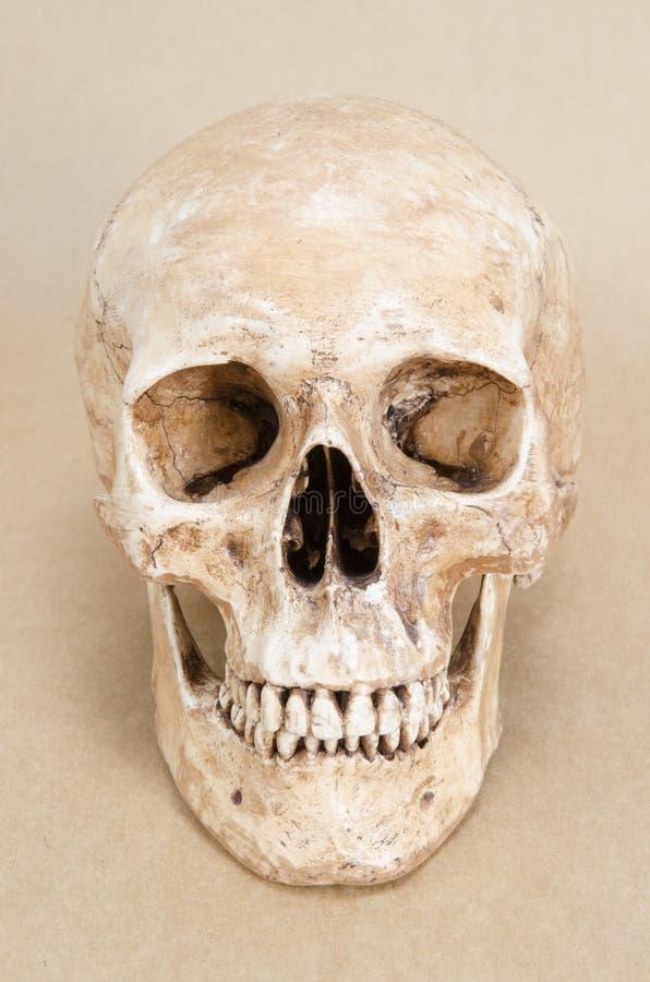 Crâne humain sur le vintage brun image libre de droits