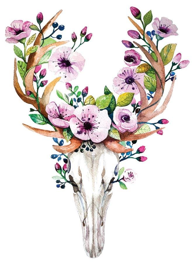 Crâne lumineux de cerfs communs de vecteur d'aquarelle avec des fleurs image stock