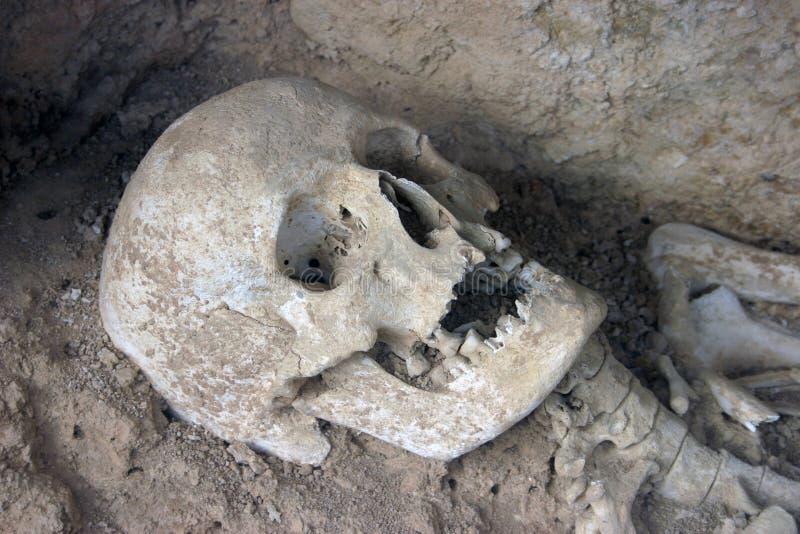 Crâne Préhistorique Photographie stock